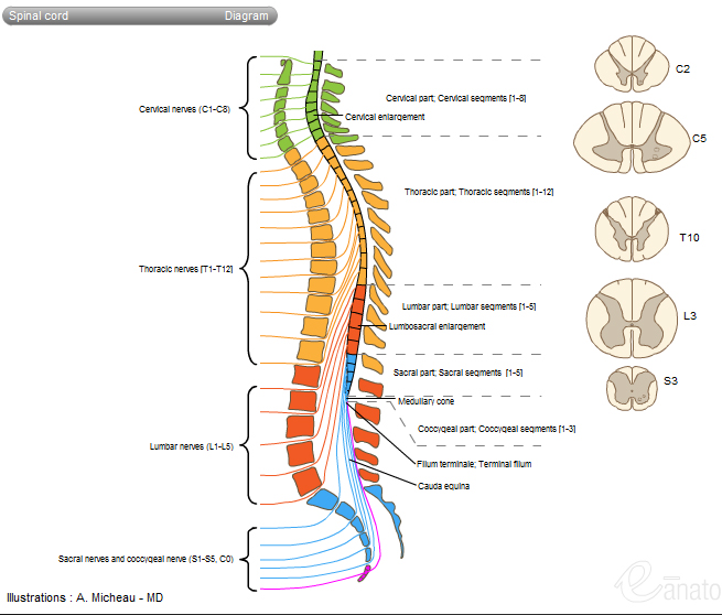 JHU Medicine - Spinal Cord Injury