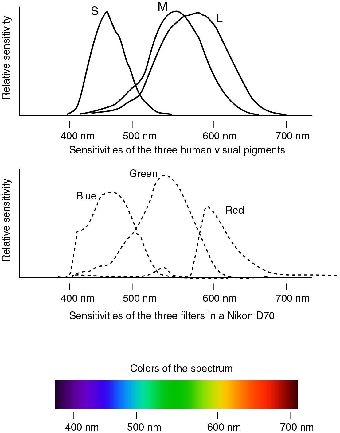 Sensing Violet The Human Eye And Digital Cameras